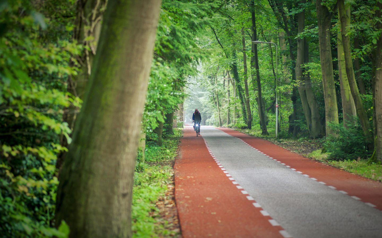 Rustige en bosrijke omgeving